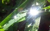 ما أروع قطرات الندى على الاوراق ونعكاس اشعة الشمس