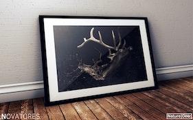 The Deer – Nature Series